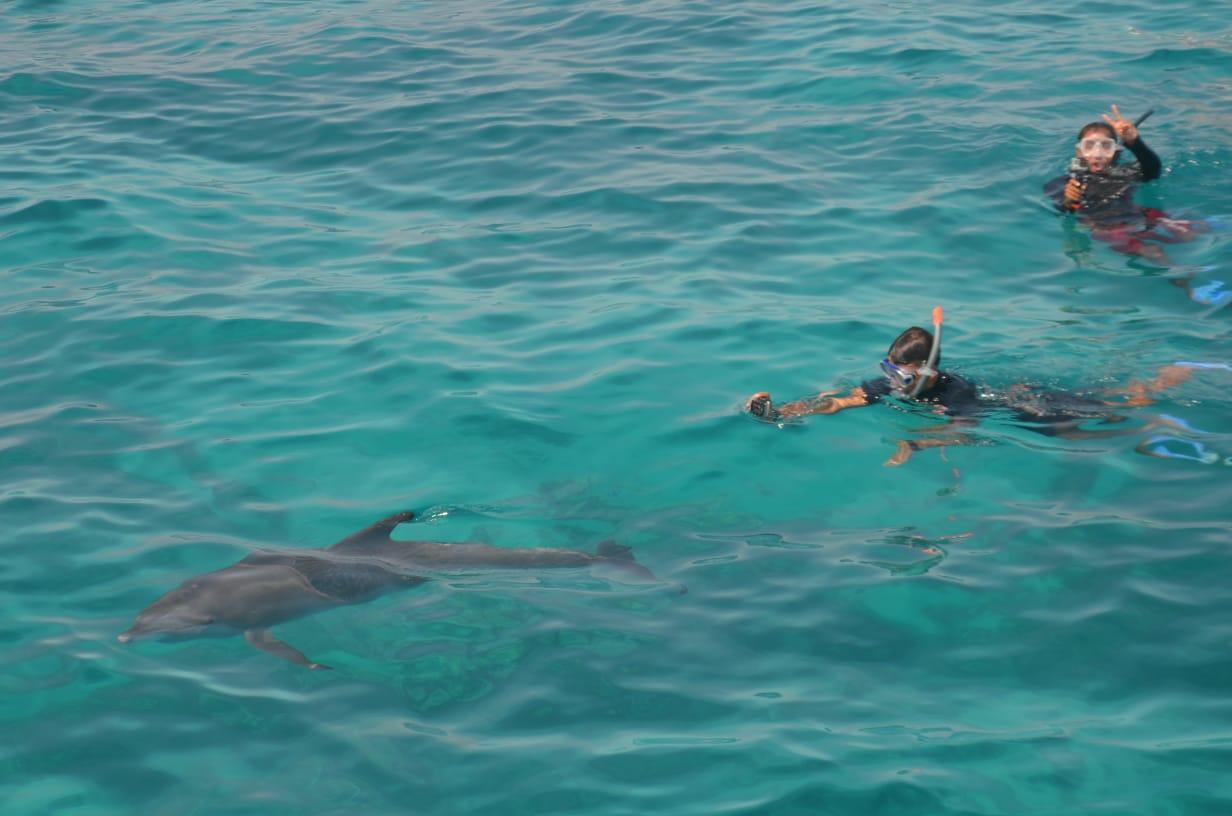 Mit Delfinen Schwimmen Hurghada | Dolphin House