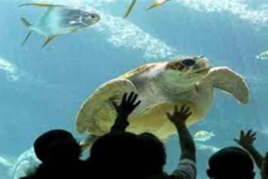 Das Grand Aquarium Hurghada