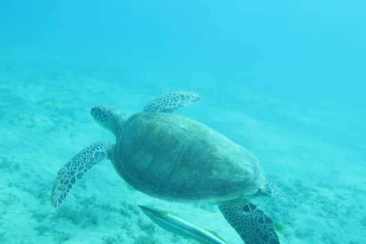 Schildkröten Tour