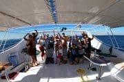 Delfins chwimmen Hurghada