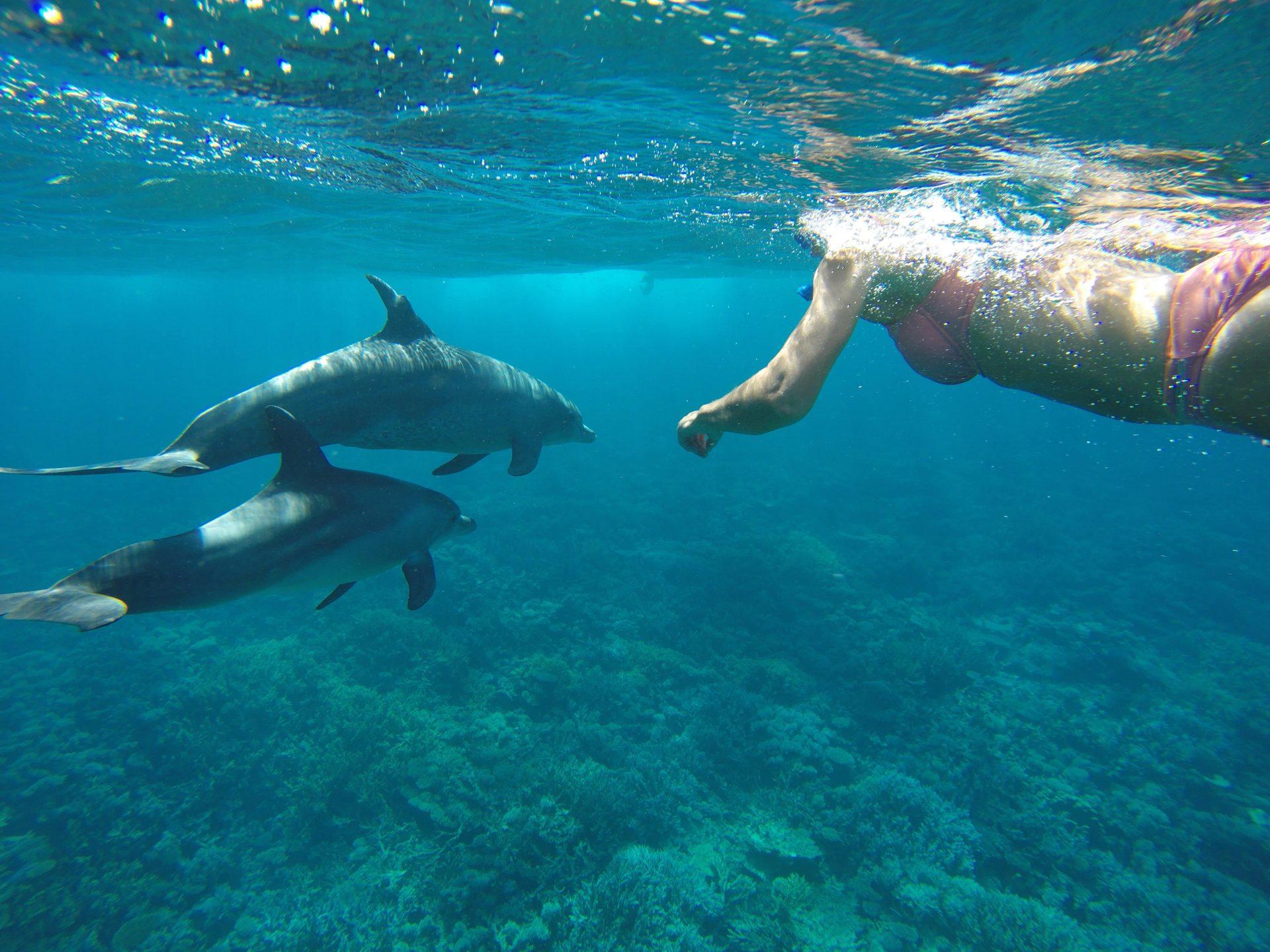 Delfin Schwimmen Ausflug   Elite VIP Ausflug