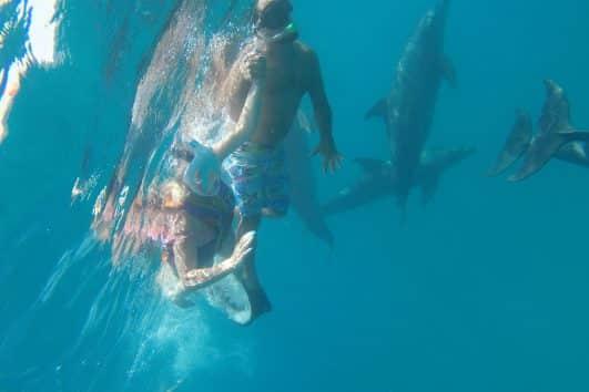 Delfinschwimmen Hurghada
