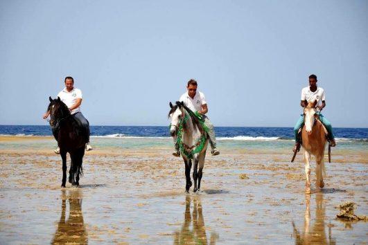 Pferde ausritt