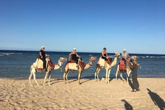 Kamele Ausritt