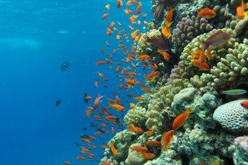 Sharm el naga Schnorchelausflug