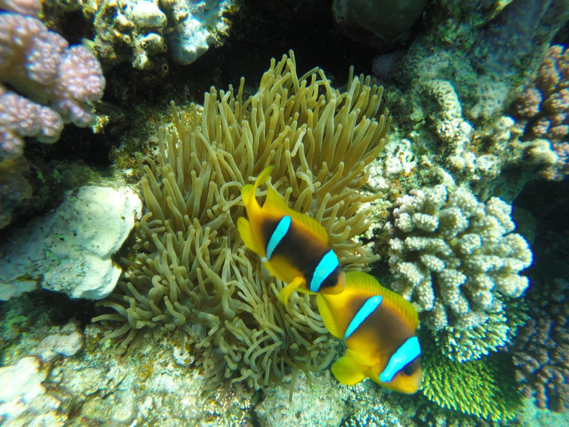 Sharm El Naga Schnorchelausflug   Privat Ausflug