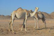 Mega Safari Ausflug Hurghada