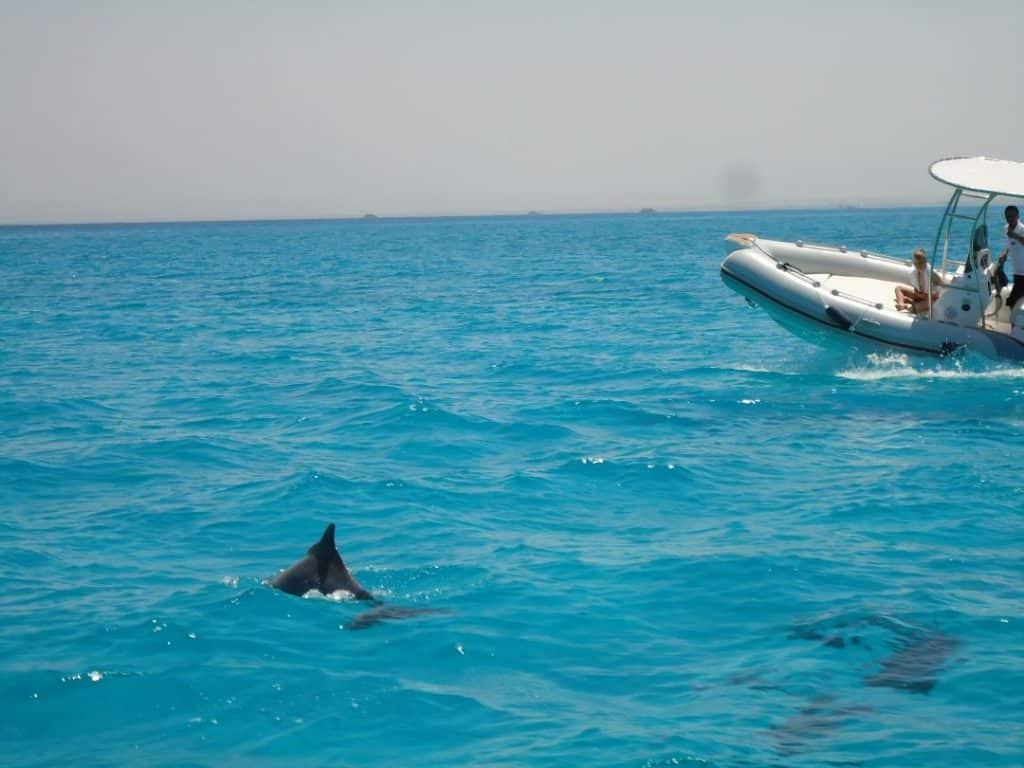 delfine speedboot