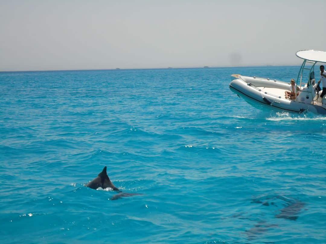 Speedboot Hurghada   Delfin Tour